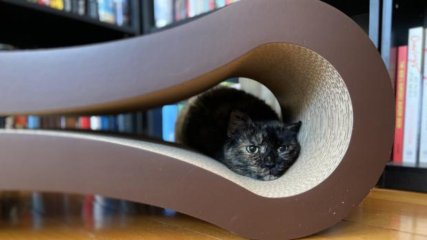 The Wiltshire Gazette and Herald: Shadow loves every part of the PetFusion lounger. Credit: Reviewed / Kate Tully Ellsworth