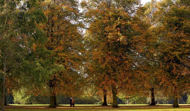 Walkers enjoy a stroll in Calderstones Park, Liverpool, as the leaves begin to change with the arrival of Autumn.
