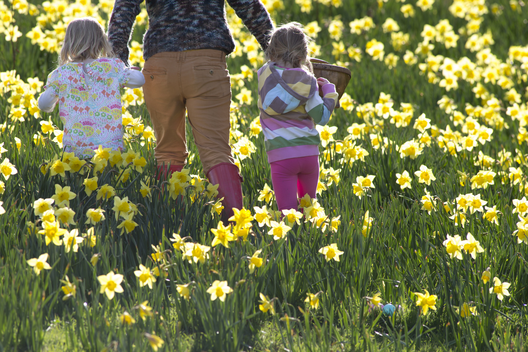 Two little girls walk through a field of daffodiles with a woman and a basket of easter eggs..