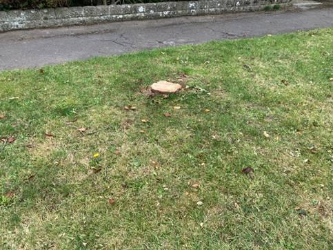 The Wiltshire Gazette and Herald: The stump was all that was left