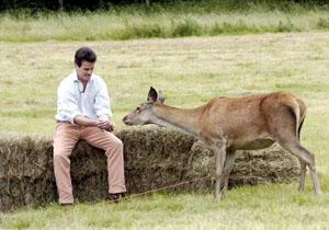 FRIENDS: Michael Petley feeds one of the deer remaining in his sanctuary at Potterne (19813/29)