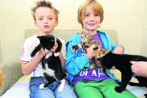 Charity in plea to pet lovers as flood of kitties arrives