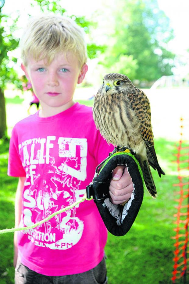 Alfie Frost, with Molly the kestrel at the woodland crafts day