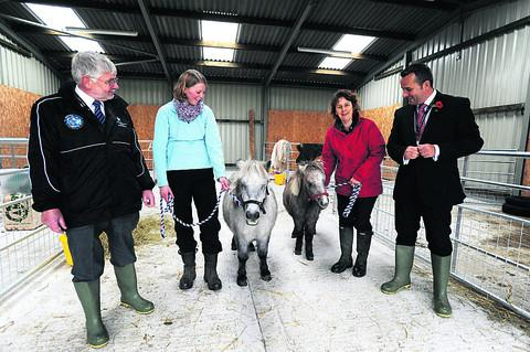 The Wiltshire Gazette and Herald: Miniture Shetland pony Betty and her daughter Lucy with, from left, Peter Rigby, Springfield's manager of extented services, Harriet Baulu, teaching assistant, Laura Jones, Greenfields campus manager, and headteacher Trystan Williams