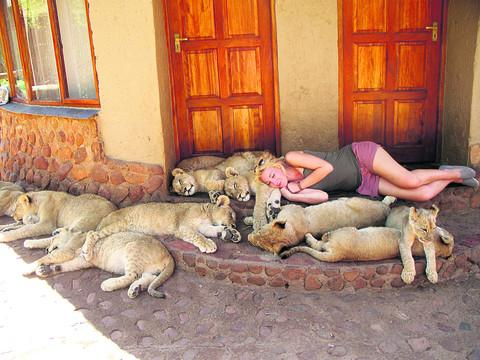 Gabriela Drage settles down with 13 lion cubs