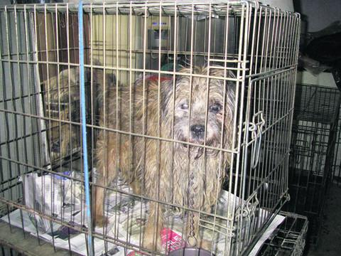 Some of the dogs kept in cages by Carol Pepper and Sean Atkinson