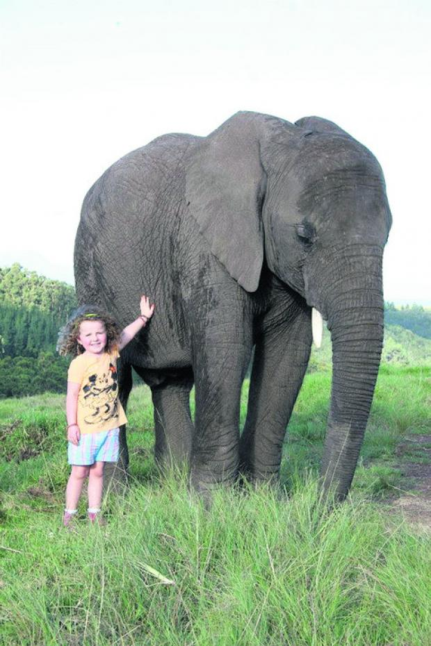 The Wiltshire Gazette and Herald: Poppaea with Mashudu, the elephant she has befriended in South Africa