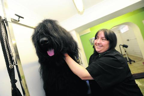 Five-year-old Seiso will be at Crufts