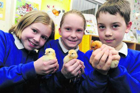 Pupils Claire, Hannah and Max with the hatched chicks.