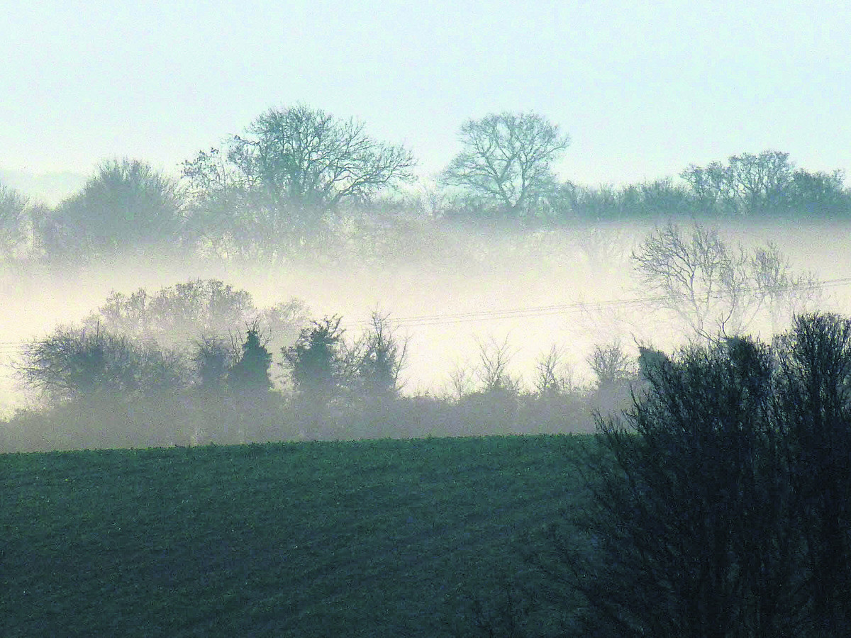 A misty morning looking across a view on Manor Farm.
