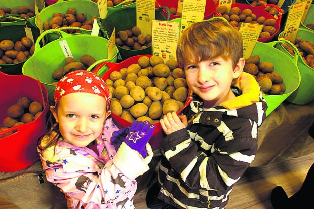 Verity and Elliot Griffiths test the tubers at Urchfont Potato Fair