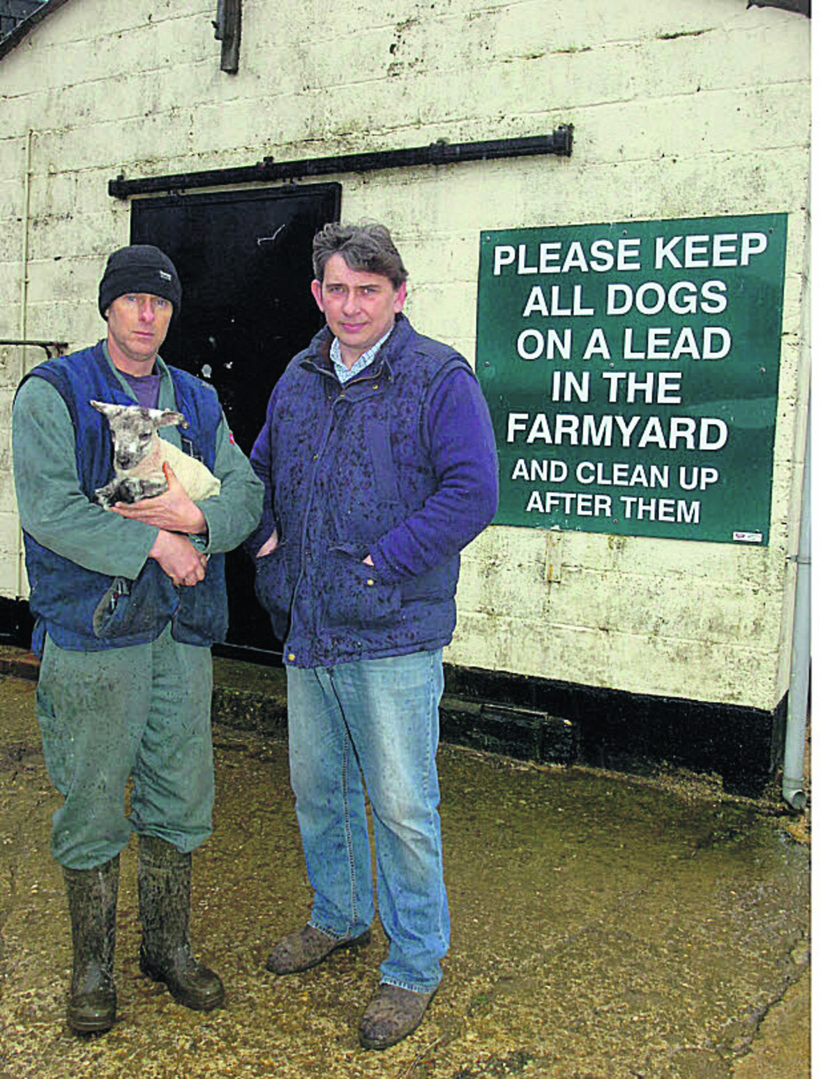 Farmers Andrew Cunninghame and Robert Strange found  animals scattered after the attack	        (PM1038) By PAUL MORRIS