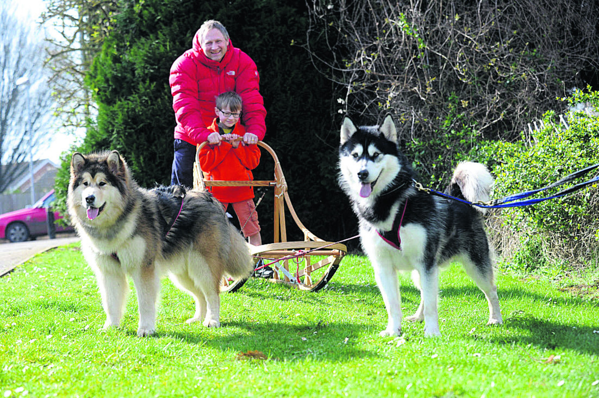 Stuart Folustone with son William and dogs Penny and Leo