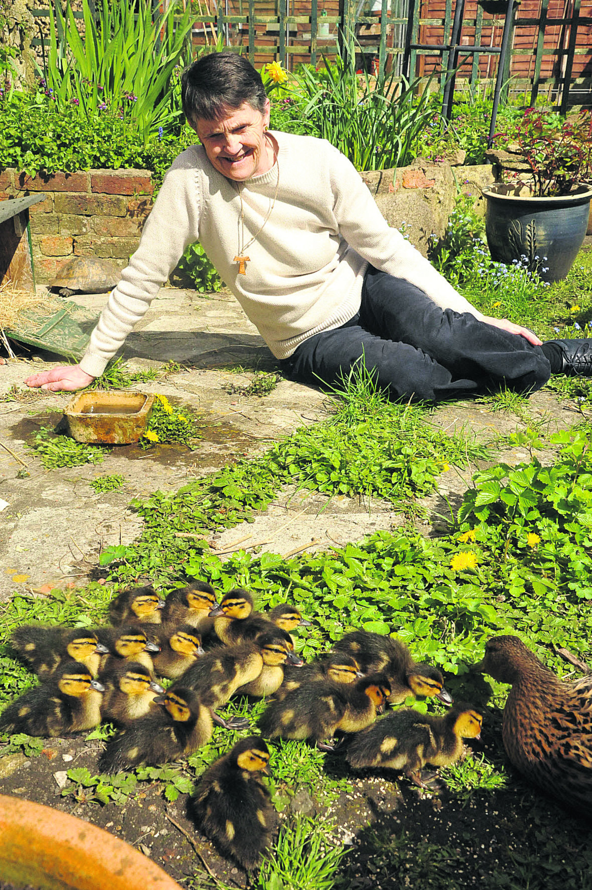 Ducklings live the high life in Chippenham