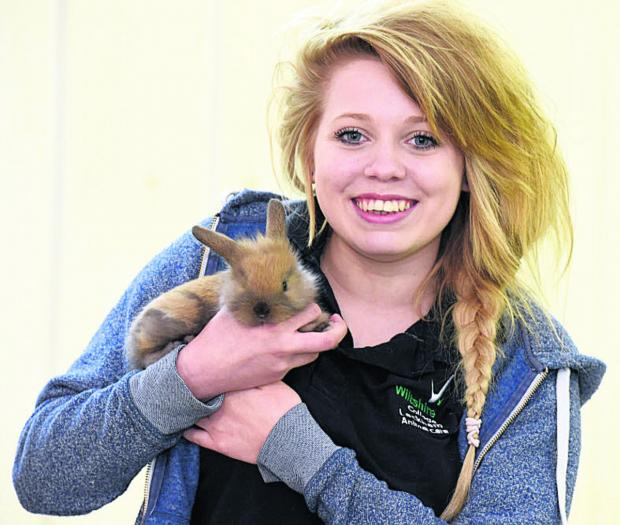 The Wiltshire Gazette and Herald: Amber Keighley, an animal management student, with a lionhead lop rabbit