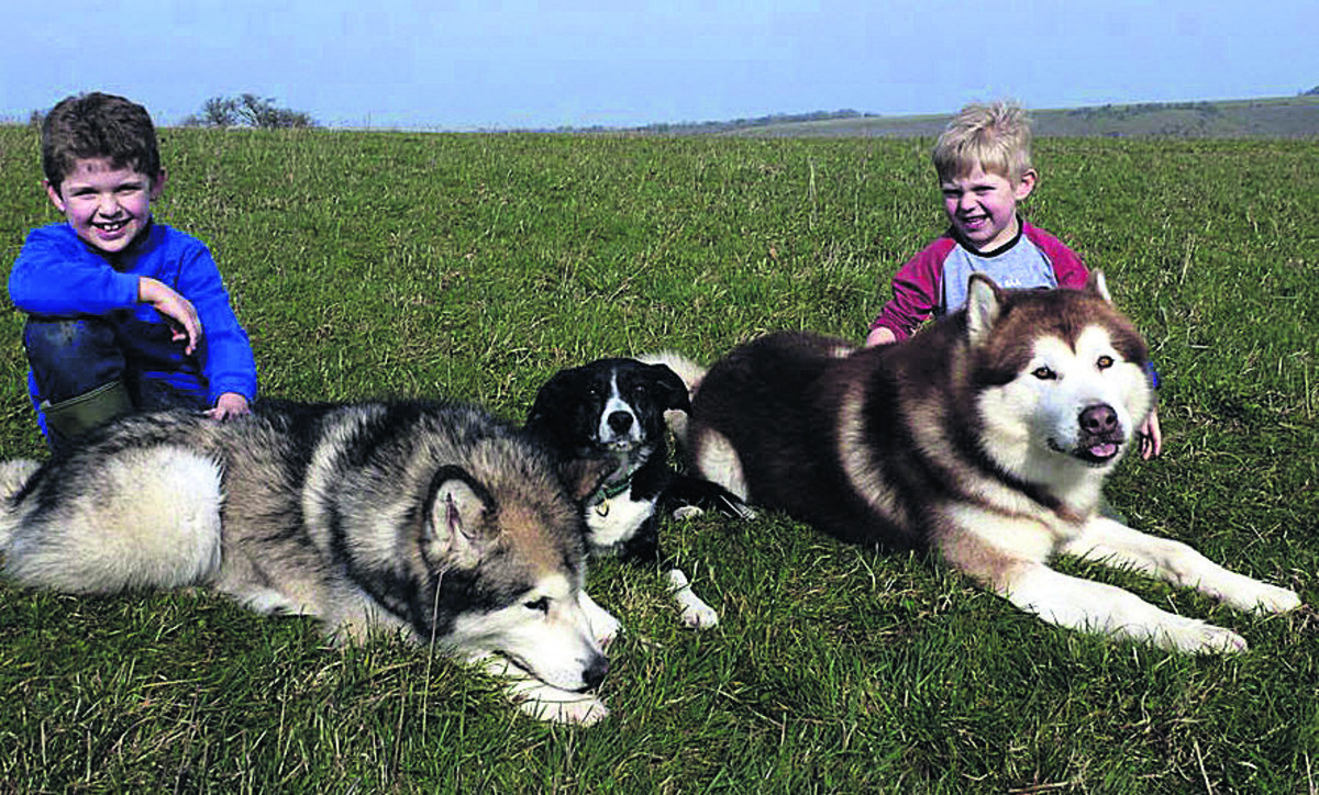 Animal charity fundraiser, Alfie Waker, aged nine, has teamed up with his little brother Charlie to help abandoned Malamute dogs