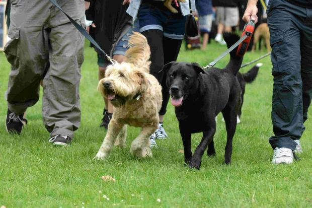 Lacock Dog show will support horse cause