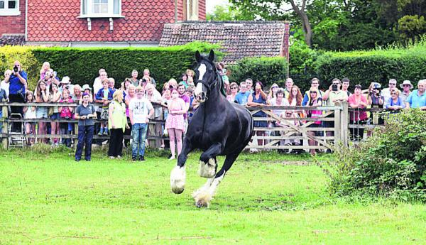 Hundreds see Wadworth horses kick off their summer holiday at Poulshot