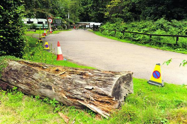 Log barriers have been put down to protect tree roots