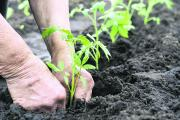 Zena Robson, Woodborough Garden Centre -   Planting tips for young seedlings