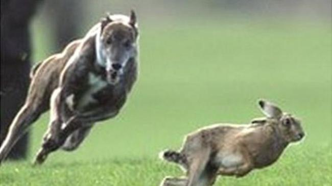 Hare coursing and other rural crimes are now under scrutiny